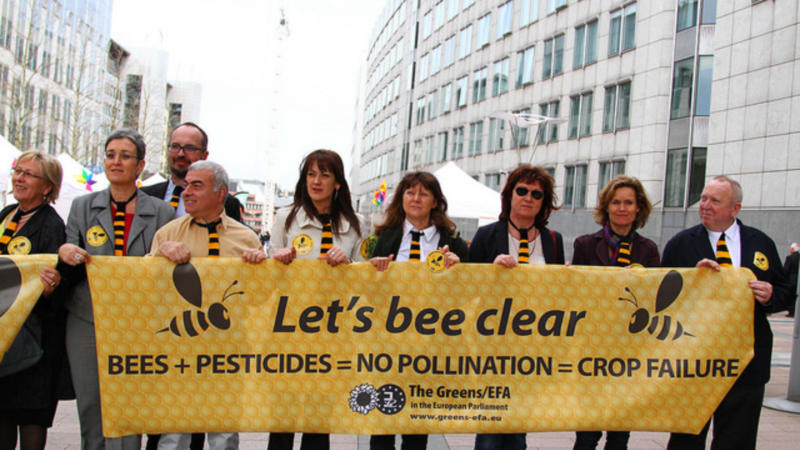Image result for In defence of bees: a pesticide ban is justified