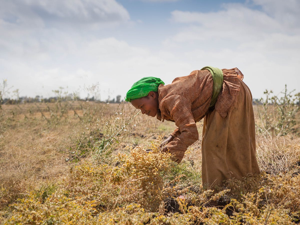 The Dreamer's Disease: How Agroecology will Starve Millions
